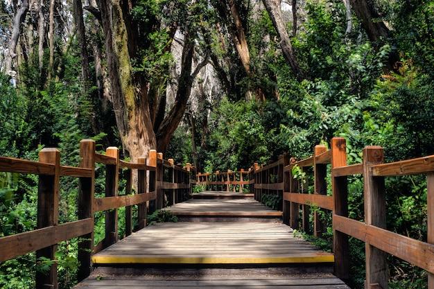Houten pad omgeven door bomen