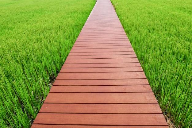 Houten pad op rijst veld
