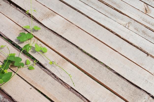 Houten ruwe vloer achtergrond of textuur. borden diagonaal gelegd. groene tak van druiven op planken