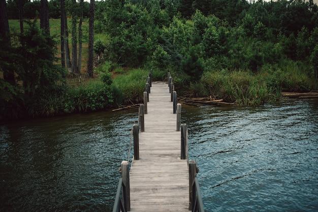 Houten steigerpromenade die van meer naar bos leidt