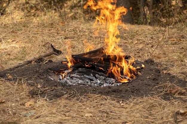 Houten stokken in vuur branden. vreugdevuur in het bos. kampvuur in de natuur