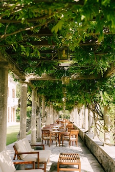 Houten tafels in het restaurant op het terras onder blauweregen wijnstokken in de oude kolommen van een italiaan