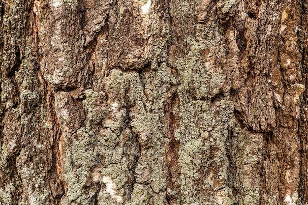 Houten textuur berkenboom van donkere, ruwe boomschors bruine kleur