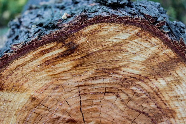Houten textuur van de gesneden achtergrond van de boomboomstam