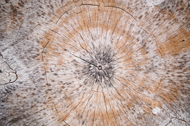 Houten textuurachtergrond. oppervlakte van hout met aardkleur en patroon. dwarsdoorsnedeaanzicht van een logboek gesneden houten textuur.