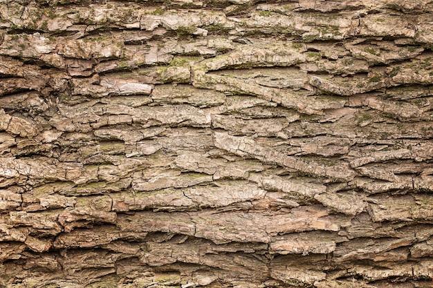 Houten textuurachtergrond, schors van boom