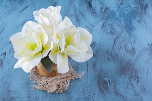 Houten vaas met witte magnolia bloemen op blauw.