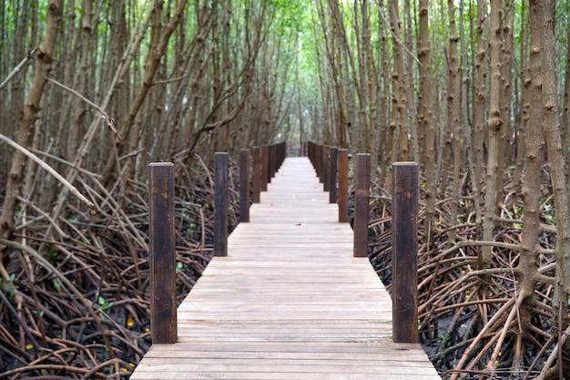 Houten wandelpad om de aard van het mangrovebos te bestuderen.