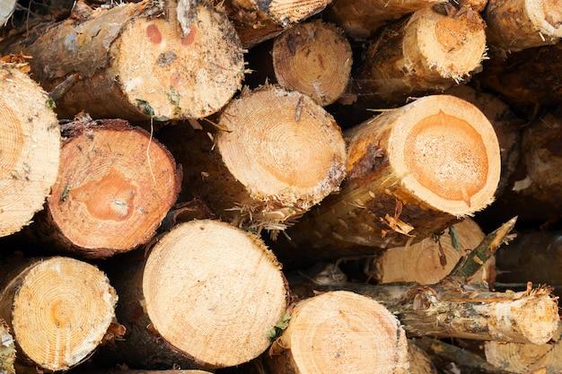 Houten zaagsneden geregistreerd in het bos voor de houtbewerkingsindustrie, vooraanzicht