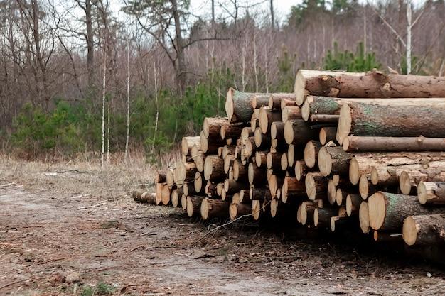 Houtkap, veel boomstammen op de grond in het bos