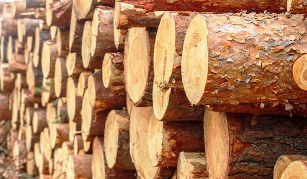 Houtstapel van vers gehakte pijnboomstammen