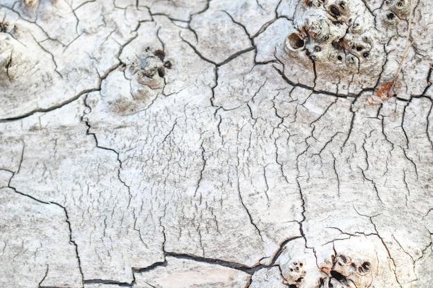 Houtstructuur met scheuren, gesneden hout. achtergrond voor ontwerpers
