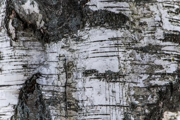 Houtstructuur, natuurlijke berkenschors