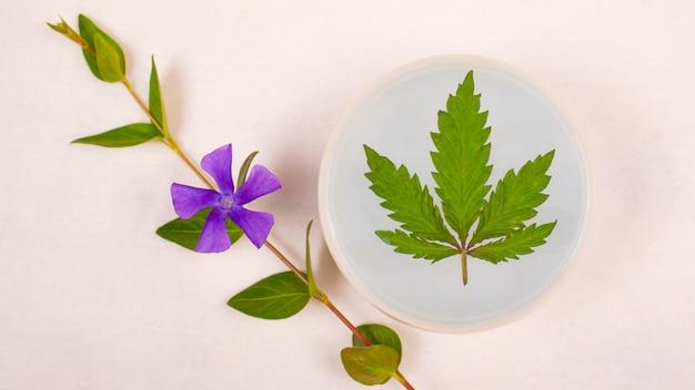 Huidverzorging cosmetica met marihuana, schoonheid. zuiverende bodyscrub met cannabisblad en een takje wilde bloemen op een witte achtergrond
