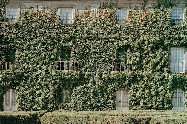 Huis bedekt met planten