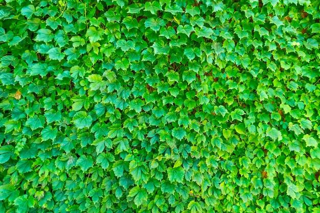 Huis blauwe tuin spring park achtergrond