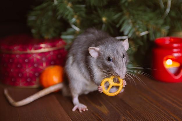 Huis decoratieve rat zit naast een kerstboom en eet een krakeling