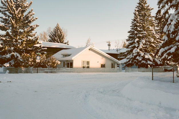 Huis met besneeuwde pijnbomen in de winter