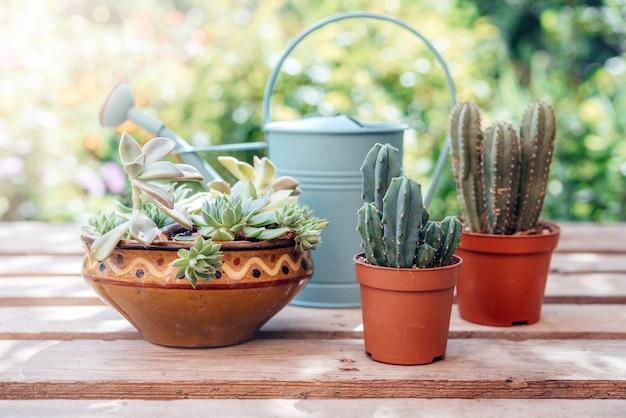 Huis tuin hoe een succulent te verpotten en vetplanten te vermeerderen