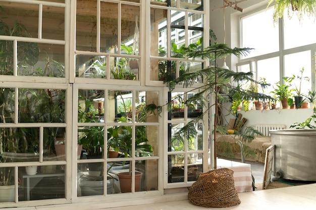 Huis tuin of kas interieur met kamerplanten, oude houten meubels en retro ramen
