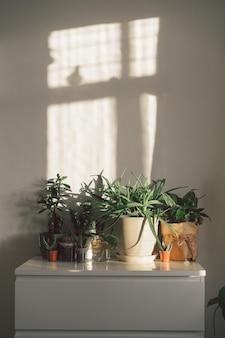 Huis tuinieren concept met verschillende potplanten, vetplanten, witte muur
