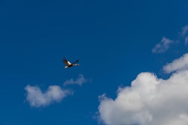 Huis voor migrerende ooievaars in zonnige lucht