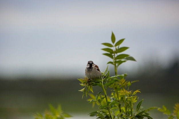 Huis zwaluwen in het natuurreservaat aiguamolls de l'emporda, girona, spanje