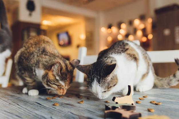 Huiselijk leven met huisdier. de jonge mens geeft zijn snack van het kattenvlees.