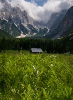 Huisje en vlinder in de krnica-vallei