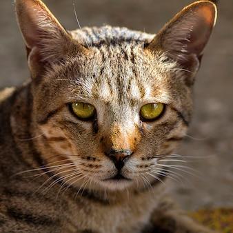 Huiskat gezicht