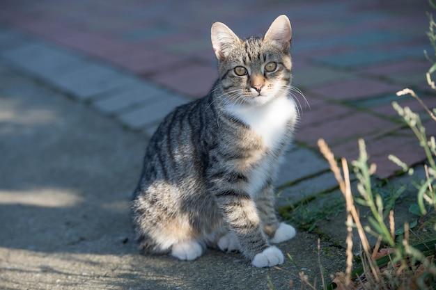 Huiskat of pluizig katje in straat zit op de weg, dierenarts.