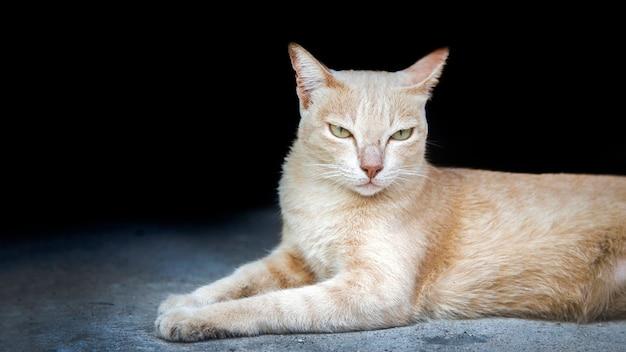 Huiskat op de vloer voor menselijk huisdier en kopieer ruimte voor tekst