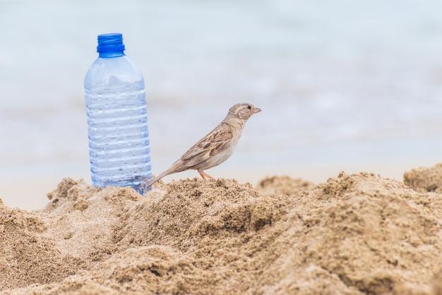 Huismusvogel op het strand dichtbij een plastic fles