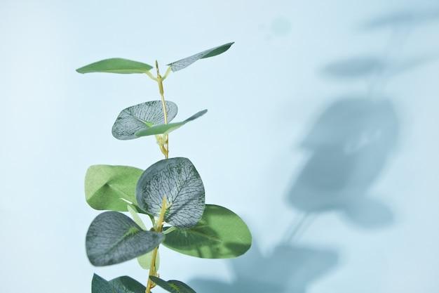 Huisplant met schaduw op muur