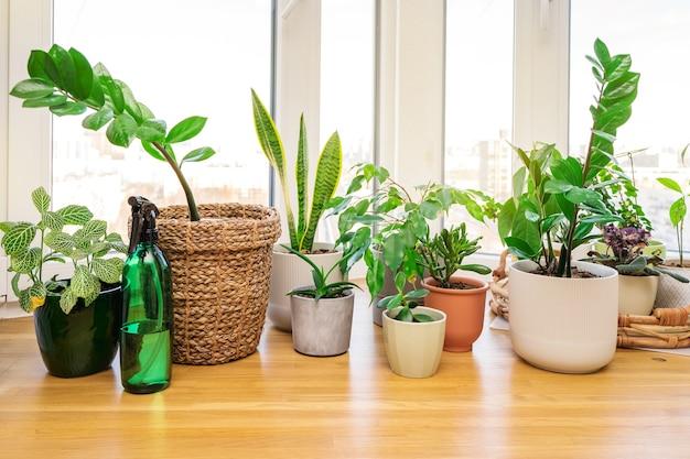 Huisplanten en bloemen op een houten vensterbank