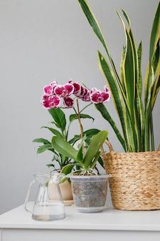 Huisplanten staan op de tafel sansevieria en orchidee voor interieurdecoratie