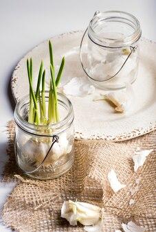 Huistuin in glazen pot groen interieurdecoratie knoflook in pot huistuin in glazen pot