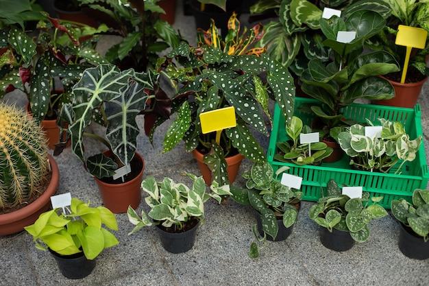 Huistuinconcept verschillende kamerplanten in potten op terras plantenverzorging samenstelling huistuin op balkon