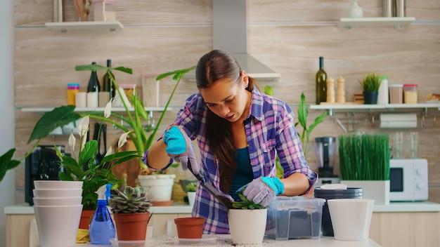 Huisvrouw herplant bloem in grotere witte keramische bloempot die 's ochtends in de keuken zit. bloemist tuinieren thuis met schop, handschoenen, vruchtbare grond en bloemen voor huisdecoratie.