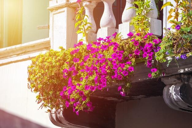 Huizen met bloemen voor de ramen