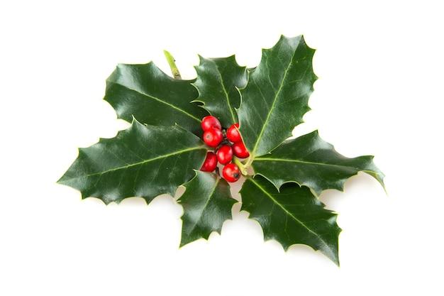 Hulst (ilex aquifolium) bladeren