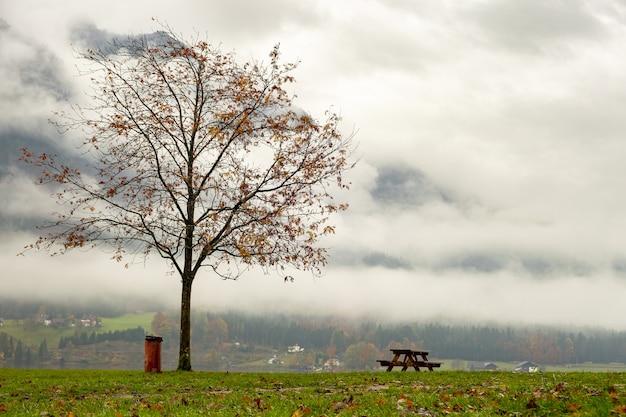 Humeurig herfstlandschap met kale bomen en banken op de oever van het bergmeer.