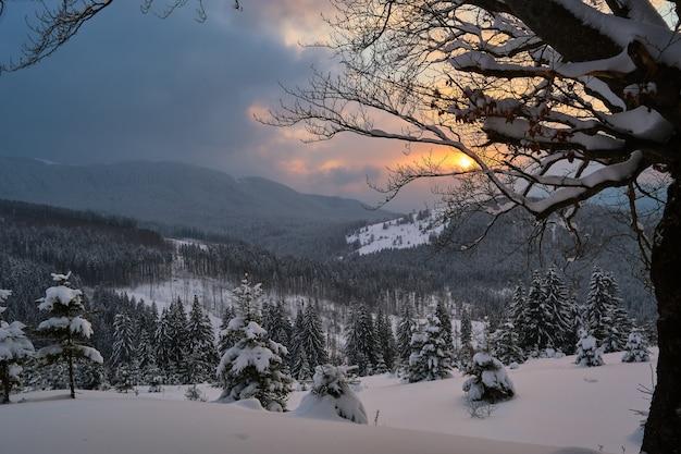 Humeurig landschap met pijnbomen bedekt met vers gevallen sneeuw in het winterbergbos in koude sombere avond.