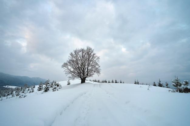 Humeurig landschap met voetpaden en donkere bomen bedekt met vers gevallen sneeuw in het winterbergbos op koude sombere dag.