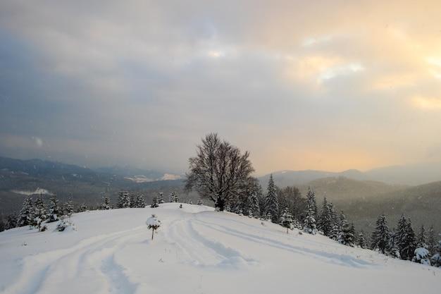 Humeurig landschap met voetpaden en kale donkere bomen bedekt met vers gevallen sneeuw in het winterbergbos op koude sombere avond.
