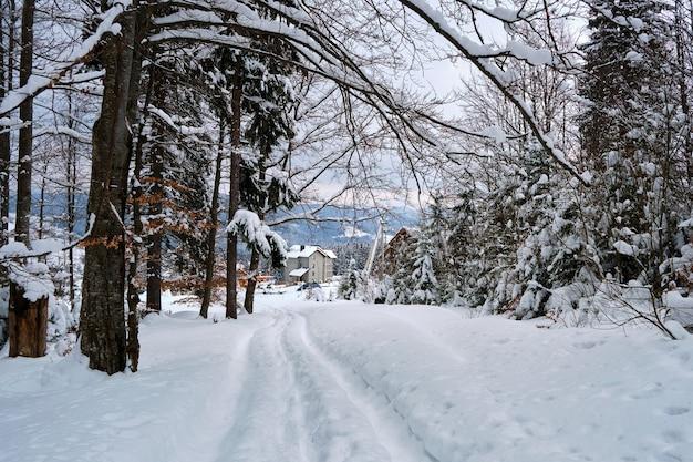 Humeurig landschap met voetpaden en pijnbomen bedekt met vers gevallen sneeuw in het winterbergbos op koude sombere avond.