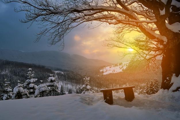 Humeurig winterlandschap met donkere kale boom en kleine houten bank op bedekt met vers gevallen sneeuwveld in winterse bergen op koude sombere avond.
