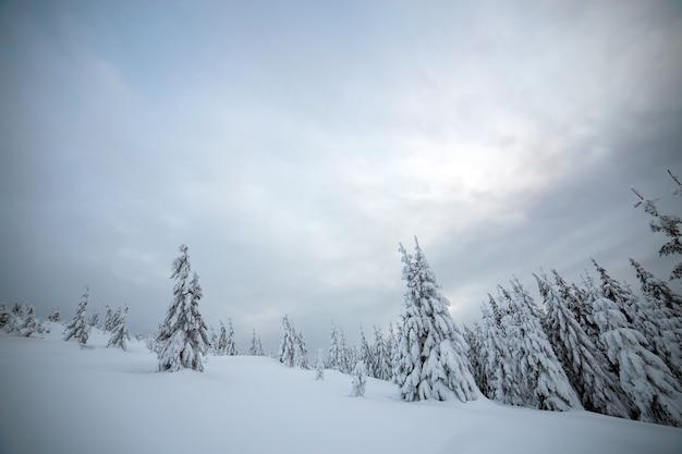 Humeurig winterlandschap van sparrenbos ineengedoken met diepe witte sneeuw in koud bevroren bergen.
