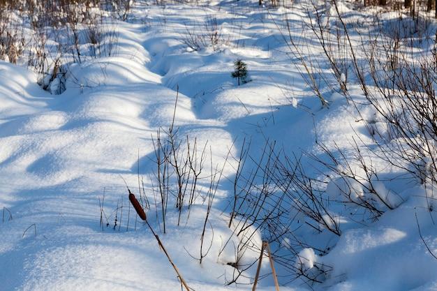 Hummocks in het moeras grote driften na sneeuwval en sneeuwstormen, winterseizoen met veel neerslag in de vorm van sneeuw, sneeuw bedekt de hummocks in het moeras