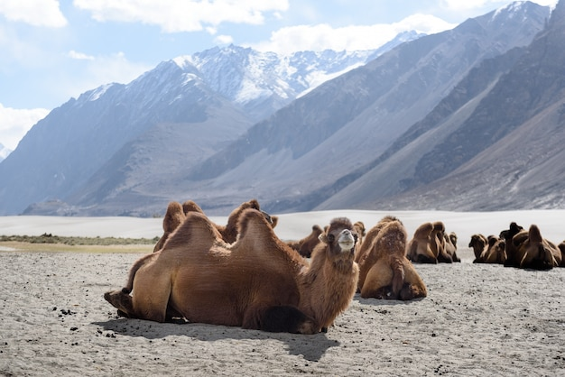 Hunderse zandduinen met daglicht en heldere hemel